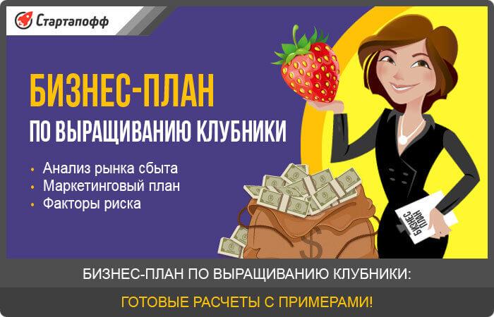 Бизнес-план по выращиванию клубники