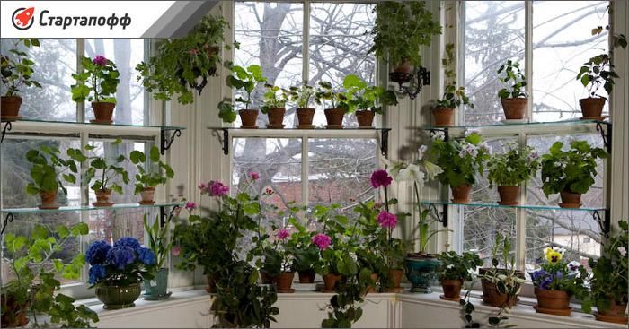 Идея для бизнеса цветочный дом