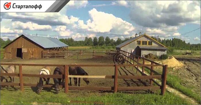 Личное подсобное хозяйство с лошадьми