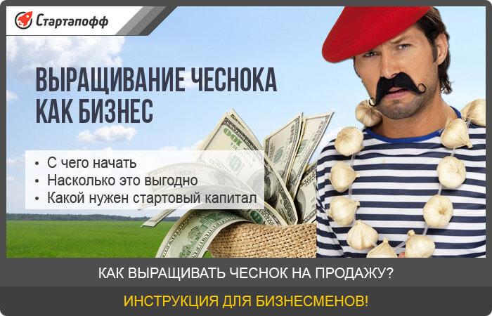 Изображение - Выращивание чеснока как бизнес vyraschivanie-chesnoka-kak-biznes