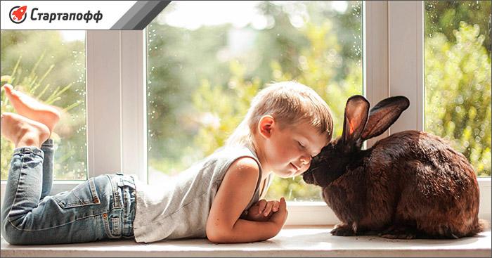 Кролики часто приобретаются в качестве домашних животных