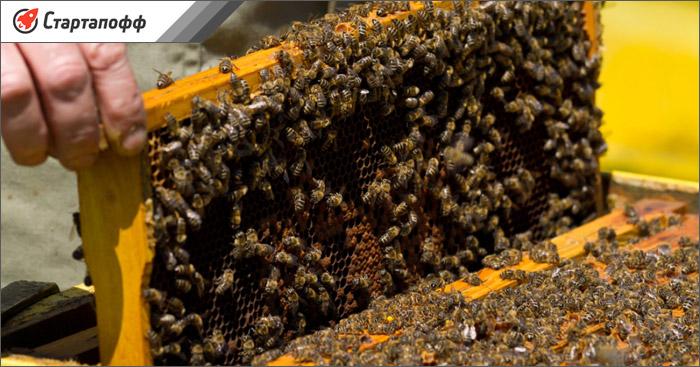 Приобрести пчел можно в пчелопакетах