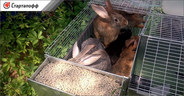 Кроличья клетка для балкона