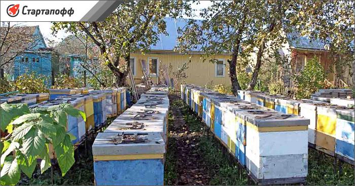 Разведение пчел на приусадебном участке