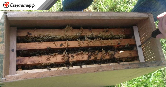 В пчелопакетах можно купить пчел